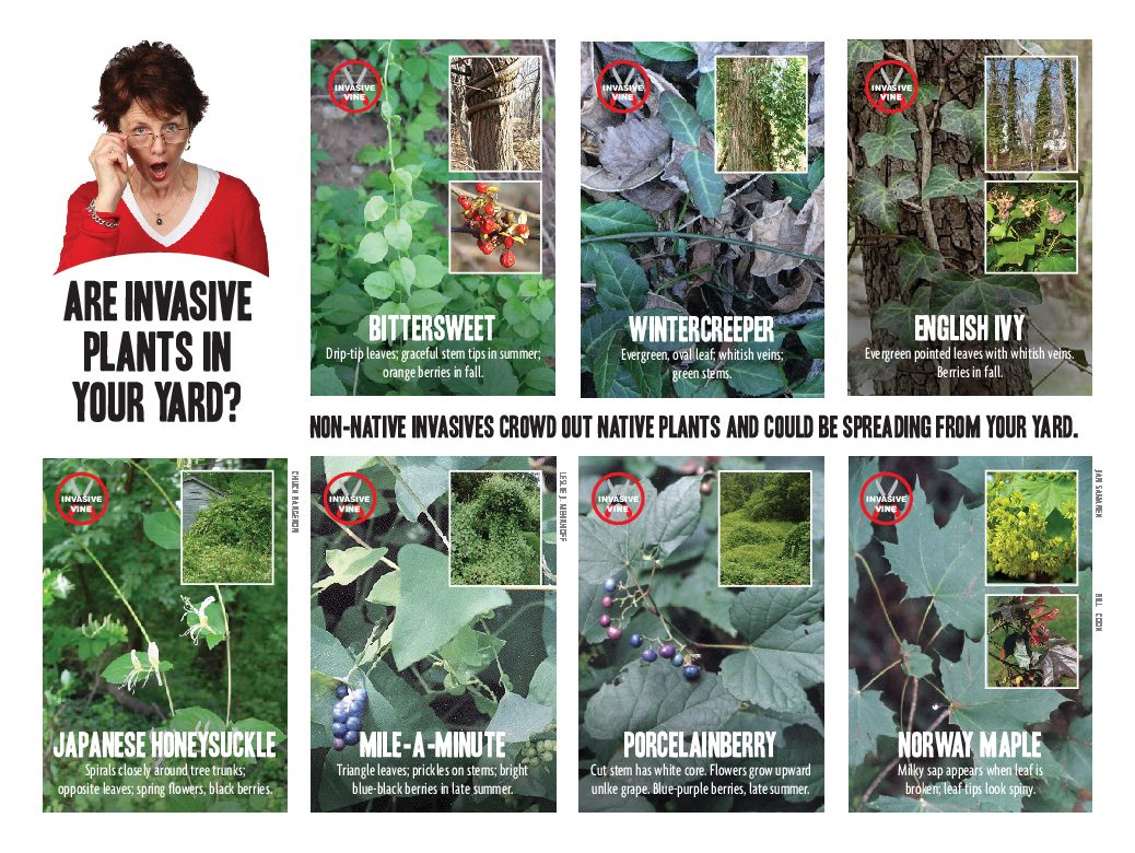 invasives in your yard