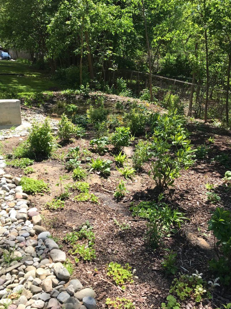 plantings beginning to take hold