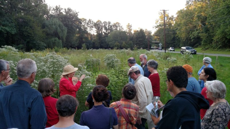 group led by Carole Bergmann viewing the meadow in bloom.