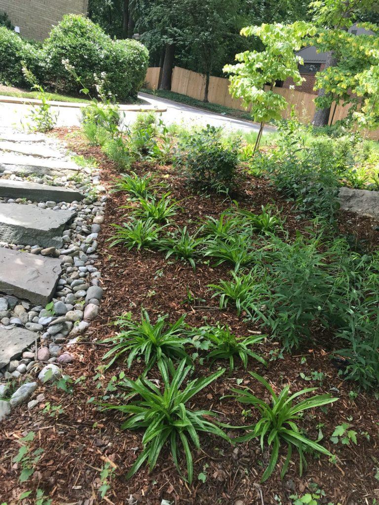 three oaks stormwater project gardens