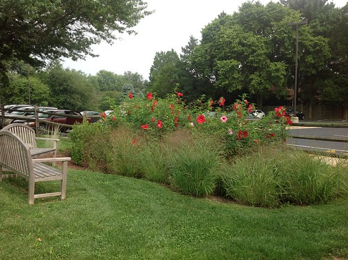 Example of RainScape Rain Garden
