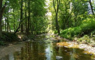 Summer on Sligo Creek