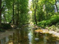 serene scene on Sligo creek