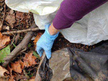 Individual litter sweep , Fall 2020