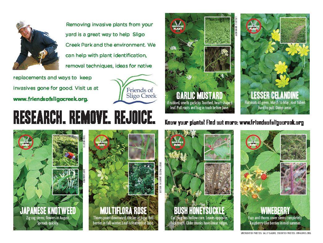 Invasive plants card, side 2: garlic mustard, lesser celandine, Japanese knotweed, multiflora rose, bush honeysuckle, wineberry